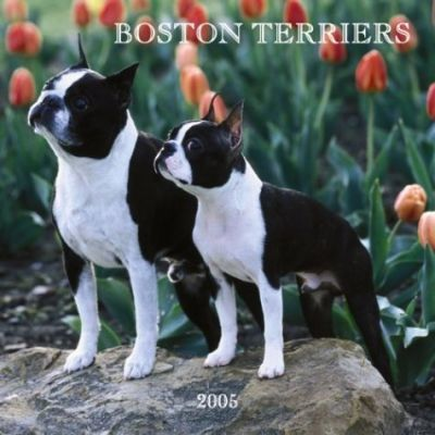 Boston Terriers Wall