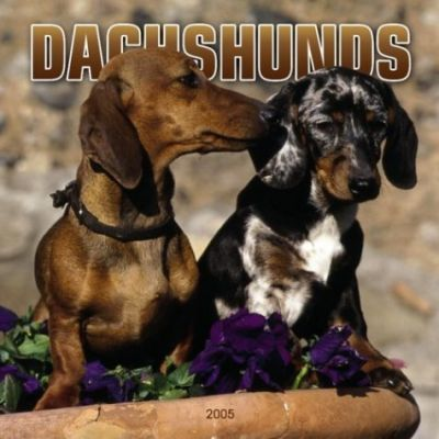 Dachshunds Wall
