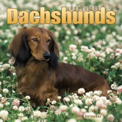 Dachshunds, Longhaired Wall