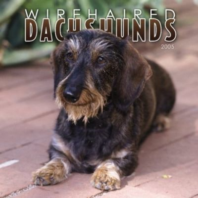 Dachshunds, Wirehaired Wall