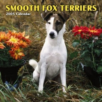 Fox Terriers, Smooth Wall