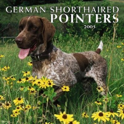 German Shorthaired Pointers Wall