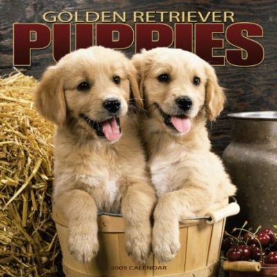 Golden Retriever Puppies Wall