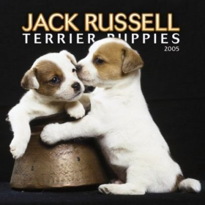 Jack Russell Terrier Puppies Mini Wall