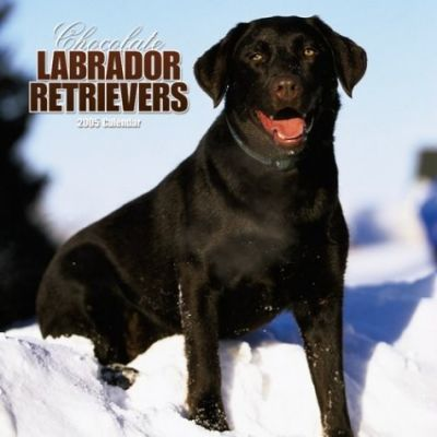 Chocolate Labrador Retrievers, 2005 Calendar