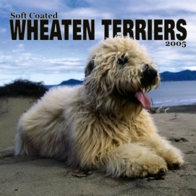 Wheaten Terriers, Soft Coated Wall