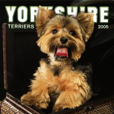 Yorkshire Terriers Wall