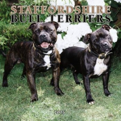 Staffordshire Bull Terriers Mini Wall