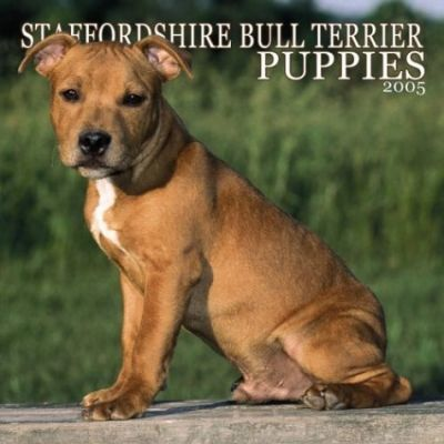 Staffordshire Bull Terriers Puppies Wall
