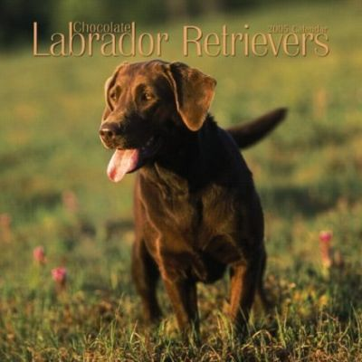 Labrador Retrievers, Chocolate Mini Wall