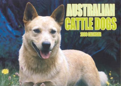 Australian Cattle Dogs 2006 Calendar