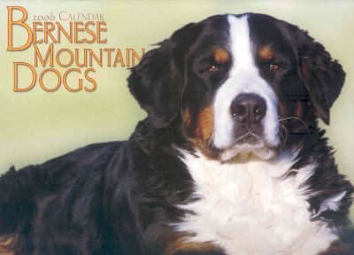 Bernese Mountain Dogs 2006 Calendar