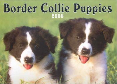 Border Collie Puppies 2006 Calendar