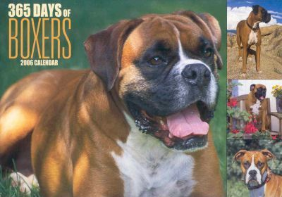 365 Days of Boxers 2006 Calendar