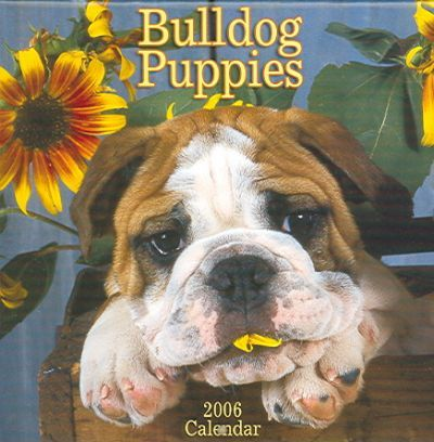 Bulldog Puppies 2006 Calendar