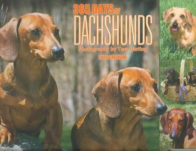 Dachshunds 365 Days 2006 Calendar