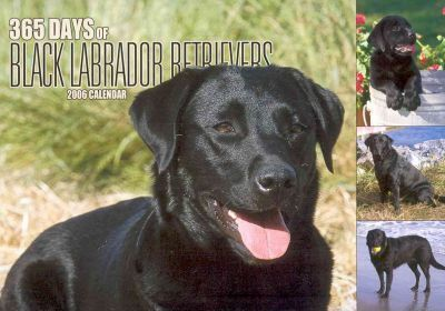 365 Days of Black Labrador Retrievers 2006 Calendar