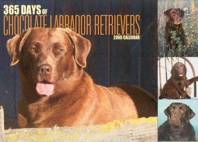 365 Days Of  Chocolate Labrador Retrievers 2006 Calendar