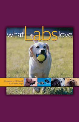 What Labs Love