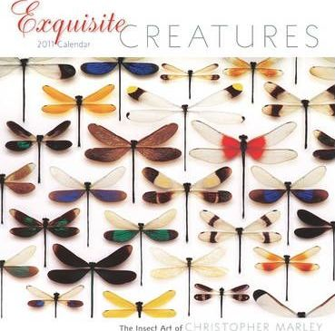 Exquisite Creatures