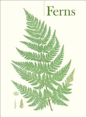 Ferns Boxed Notecards 0540