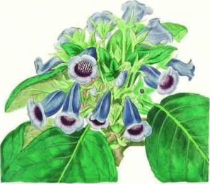 Gloxinia Small Boxed Cards 0127