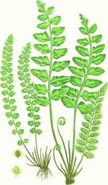 Fern Small Boxed Cards 0128