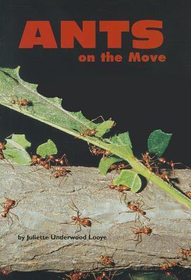 Ants on the Move