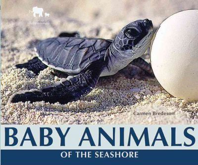 Baby Animals of the Seashore