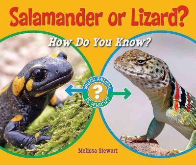Salamander or Lizard?