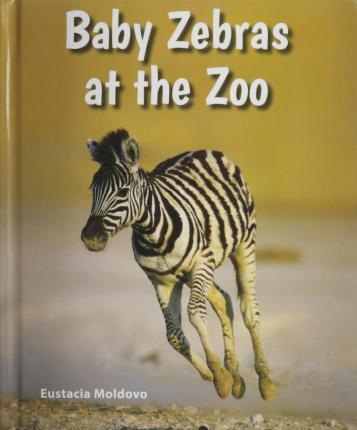 Baby Zebras at the Zoo