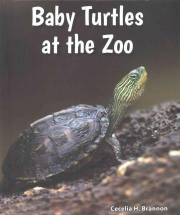 Baby Turtles at the Zoo