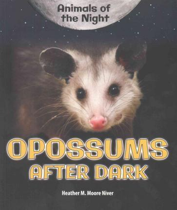Opossums After Dark