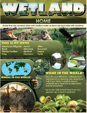 Wetland Home Cheap Chart