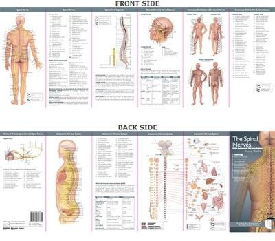 Anatomical Chart Company's Illustrated Pocket Anatomy: The Spinal Nerves & the Autonomic Nervous System Study Guide - Anatomical Chart Company