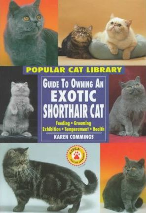 Guide to Owning an Exotic Shorthair Cat