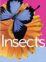 Insects (Animal Facts)
