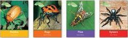 Insects and Spiders, 5-Vols