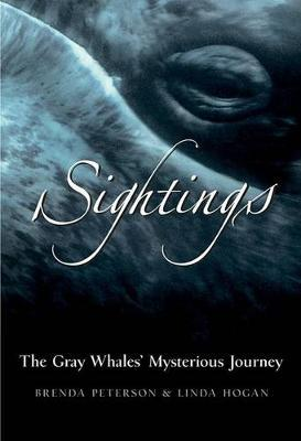 SightingsThe Grey Whales' Mysterious Journey
