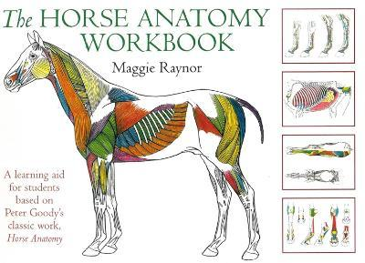 The Horse Anatomy Workbook - Maggie Raynor