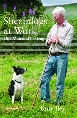 A Sheepdogs at Work: One Man and His Dogs