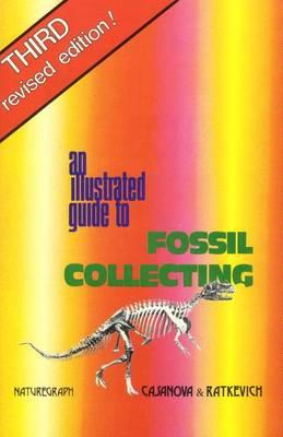 Thebridgelondon-ils.co.uk An Illustrated Guide to Fossil Collecting image