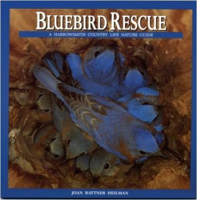 Bluebird Rescue  Country Life Nature Guide