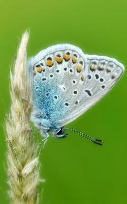 Notebook  Common blue butterfly butterflies insect wing caterpillar moth larva pupa egg order