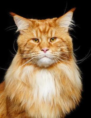 Maine Coon  Cat - Composition Book 150 pages 8.5 x 11 in. - College Ruled - Writing Notebook - Lined Paper - Soft Cover - Plain Journal