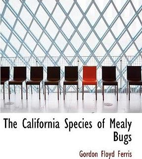 The California Species of Mealy Bugs
