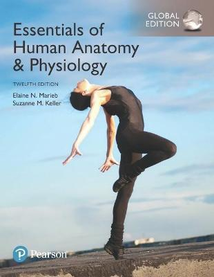 Essentials Of Human Anatomy Physiology Global Edition Suzanne M