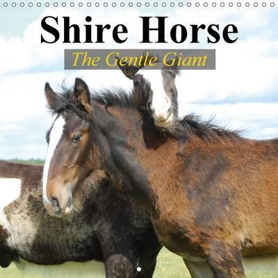 Shire Horse - The gentle giant 2015  The world's greatest horses