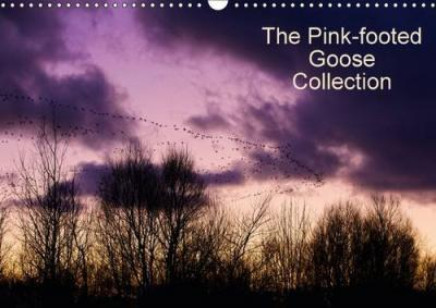 The Pinkfoot Goose Collection 2016  Collection of colourful images from the life of Pink-footed Geese.