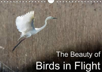 The Beauty of Birds in Flight 2016
